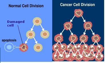 cancer and cell division relationship