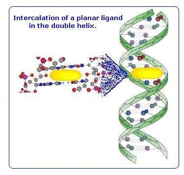 Intercalation Of Dna