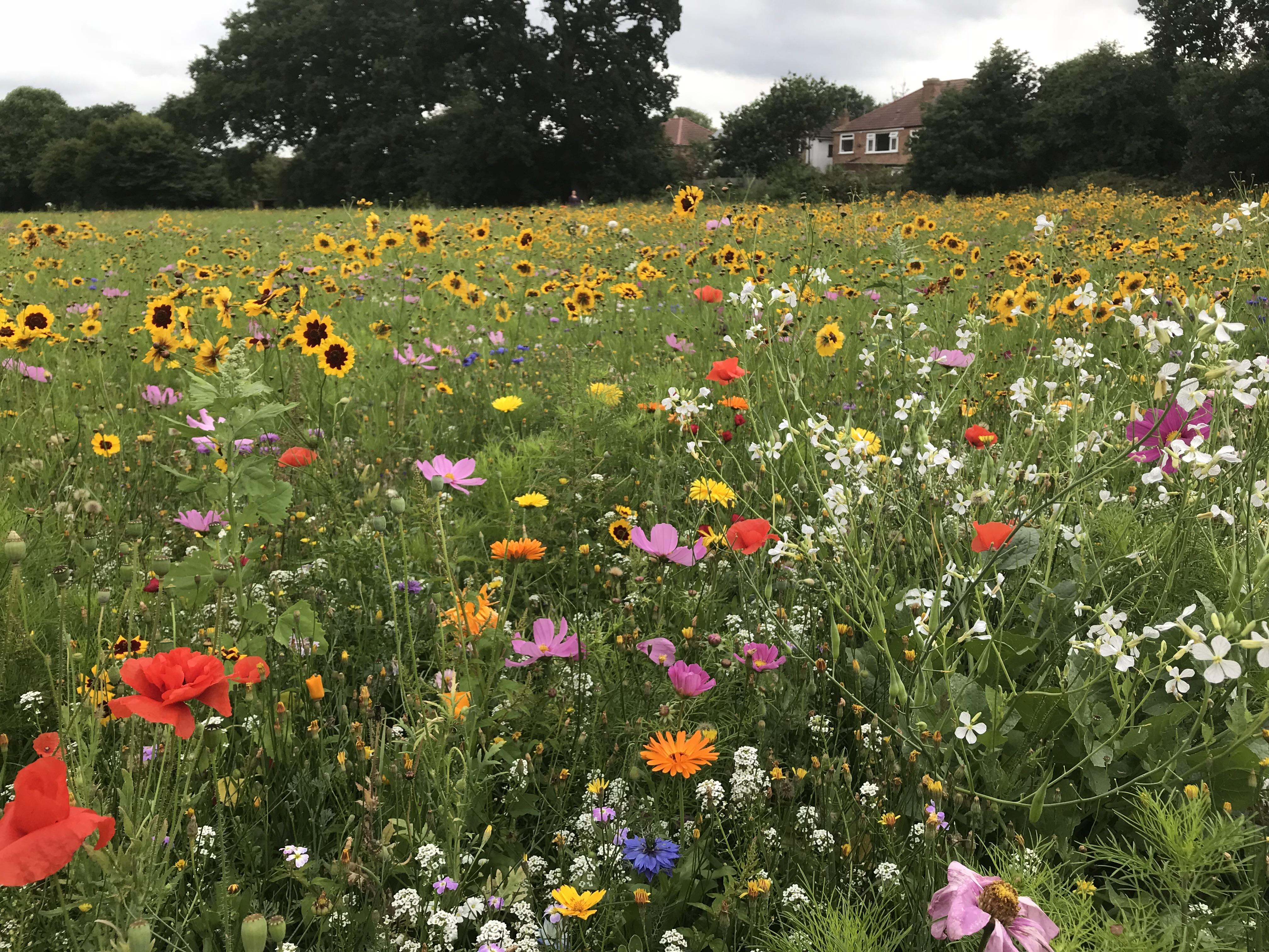 Wild Flowers In West London Henry Rzepa
