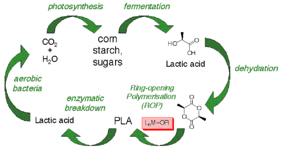 synthesise polylactic